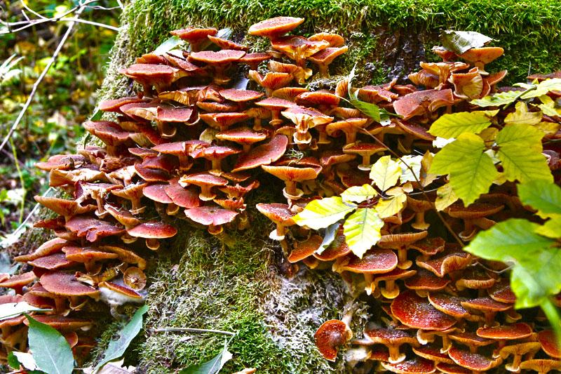 So viele Pilze dieses Jahr