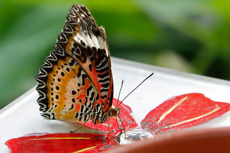Schmetterlingshaus im botanischen Garten