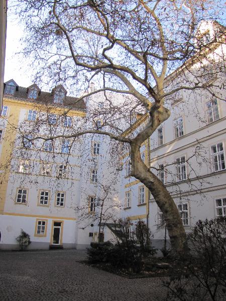 Wien 8
